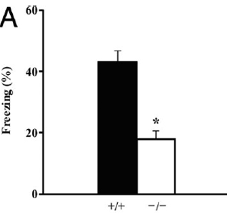 Fear Conditioning Figure 2A Bax mice